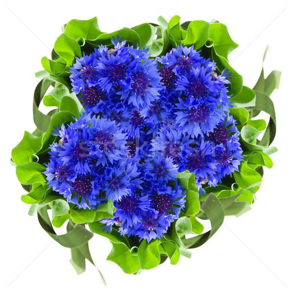blue cornflowers round bouquet Stock photo © neirfy