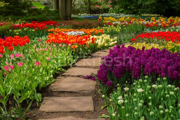 Foto stock: Pedra · caminho · jardim · flor · da · primavera · florescimento · flores