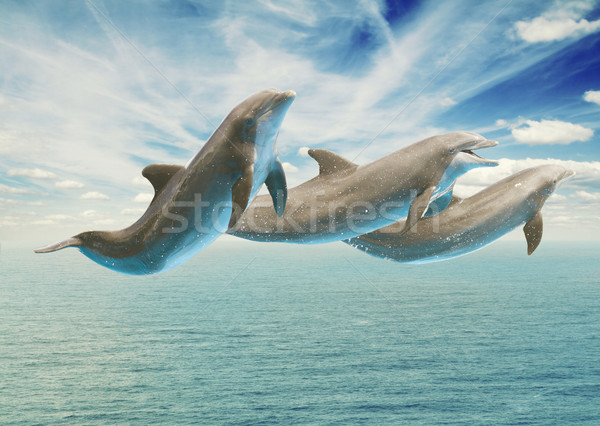 jumping dolphins Stock photo © neirfy