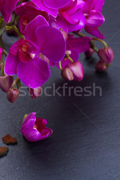 Bunch of violet orchids  Stock photo © neirfy