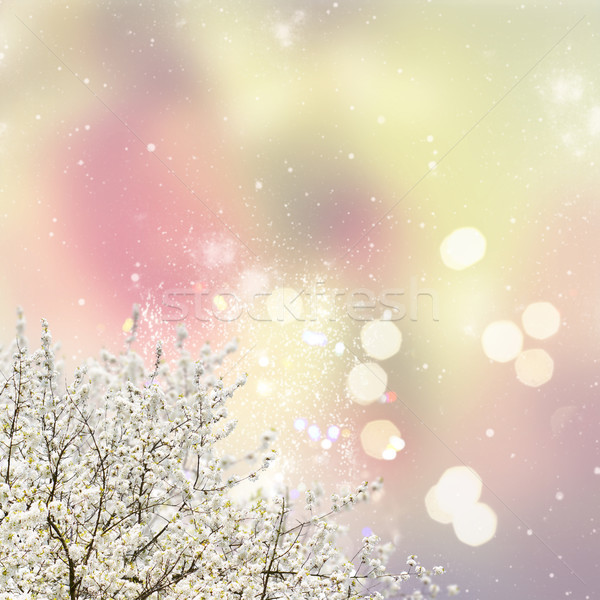 Blooming magnolia tree Stock photo © neirfy