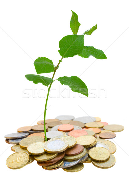 pile of coins with sprout Stock photo © neirfy