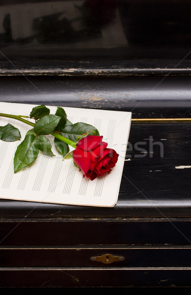rose on old piano Stock photo © neirfy