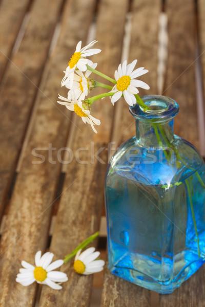 dasy flowers posy in blue pot Stock photo © neirfy