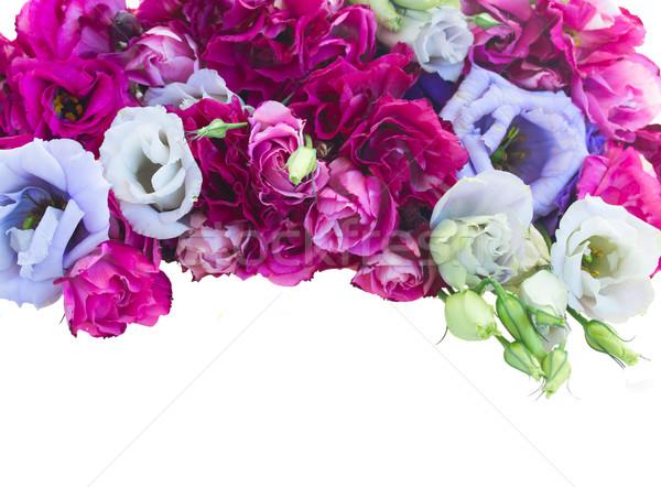 border of  violet eustoma flowers Stock photo © neirfy