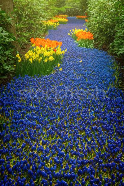 Blu fiume fiori primavera Holland giardino Foto d'archivio © neirfy