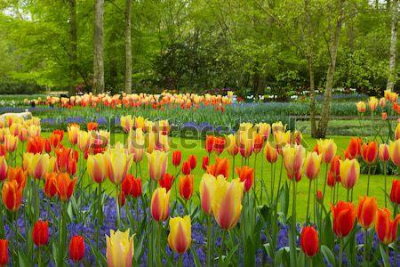 Huizen Nederland kanaal vers groeiend bloemen Stockfoto © neirfy