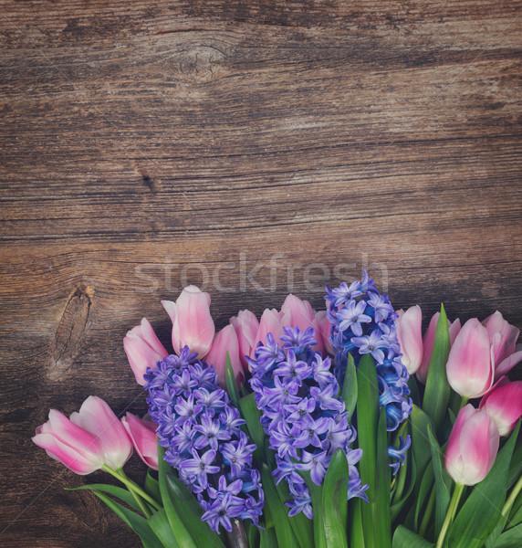 チューリップ ピンク 青 新鮮な 花 暗い ストックフォト © neirfy