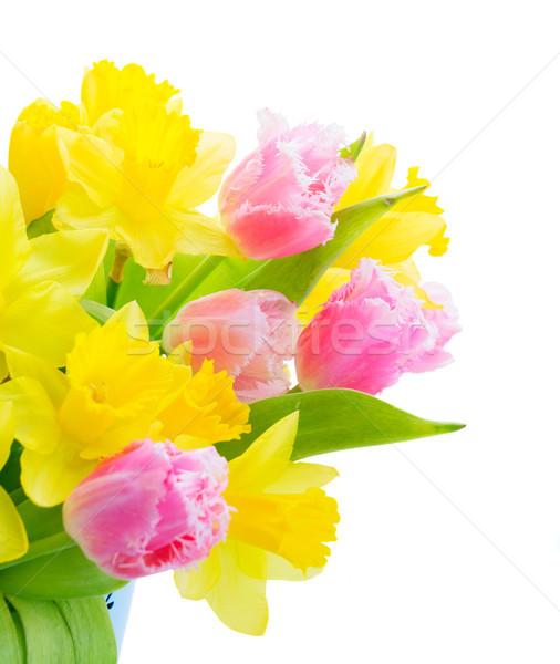 花束 チューリップ 水仙 新鮮な ピンク 黄色 ストックフォト © neirfy