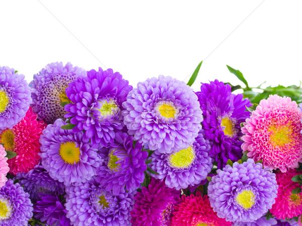 aster flowers border Stock photo © neirfy