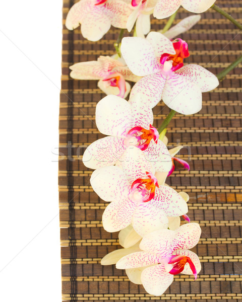 spa settings with pink orchideas Stock photo © neirfy