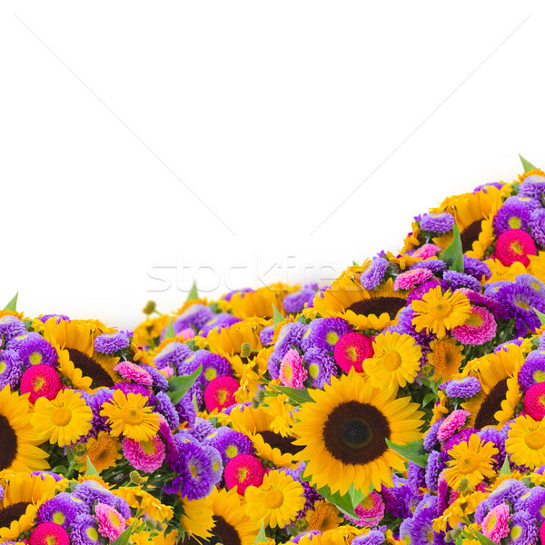 colorful field of sunflowers and mums Stock photo © neirfy