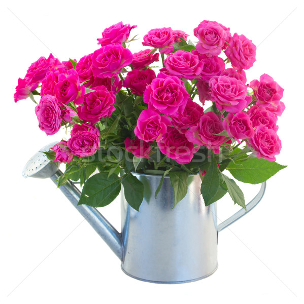 posy of blossoming pink roses in watering can Stock photo © neirfy