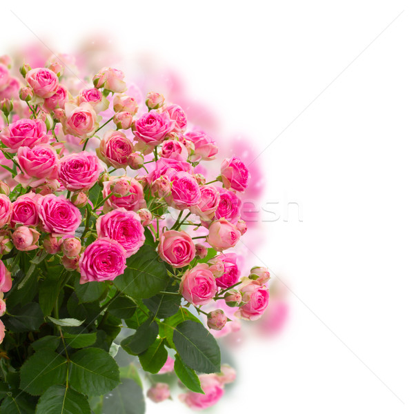 bouqet of fresh pink roses Stock photo © neirfy