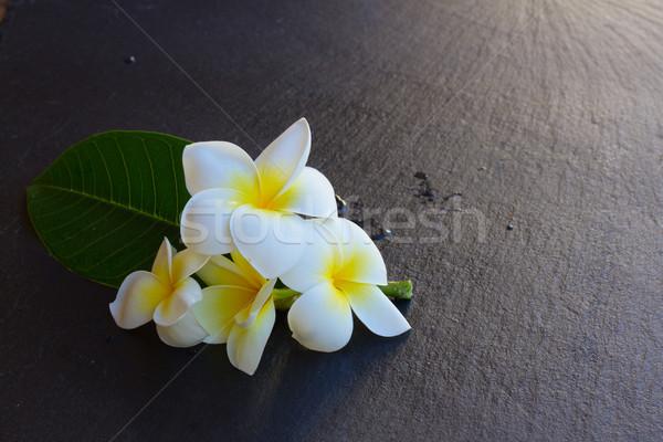 Virágok friss nedves fekete kő copy space Stock fotó © neirfy