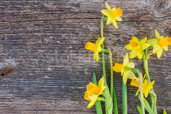 daffodils on wooden background Stock photo © neirfy