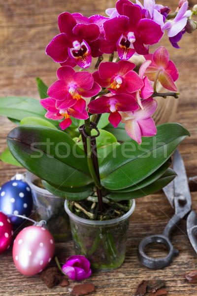Bahar mor orkide paskalya yumurtası ahşap bahçıvanlık Stok fotoğraf © neirfy