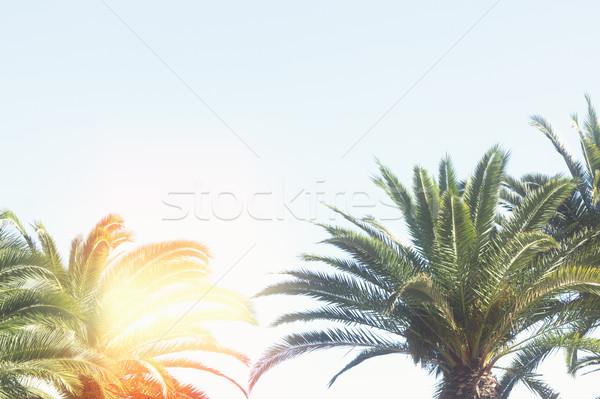 Palmera azul hojas cielo azul retro sol Foto stock © neirfy