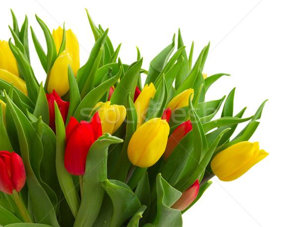 Virágcsokor citromsárga lila piros tulipánok friss Stock fotó © neirfy