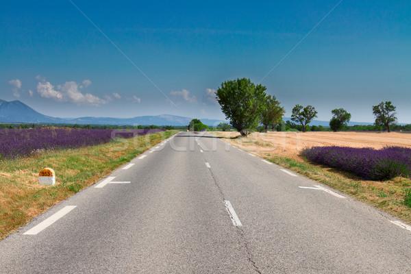 Kilátás vidéki út nyár napos idő út természet Stock fotó © neirfy