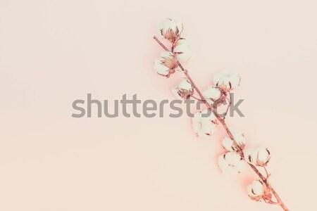 Nyers pamut ág rózsaszín copy space retro Stock fotó © neirfy