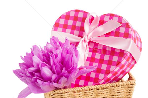 Viola crocus fiori scatola regalo isolato bianco Foto d'archivio © neirfy