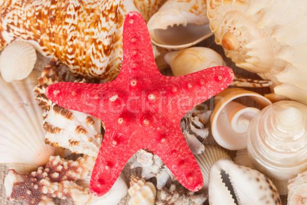 pile of seashells with starfuish Stock photo © neirfy