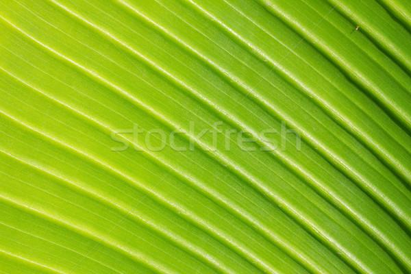 Yeşil yaprak doku taze damar makro arka plan Stok fotoğraf © neirfy
