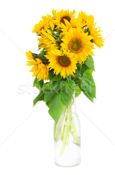 bouquet of bright sunflowers Stock photo © neirfy