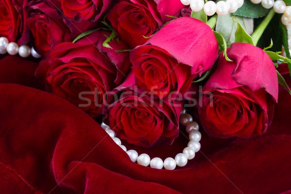 Rood rose fluwelen bos vers bloemen zachte Stockfoto © neirfy
