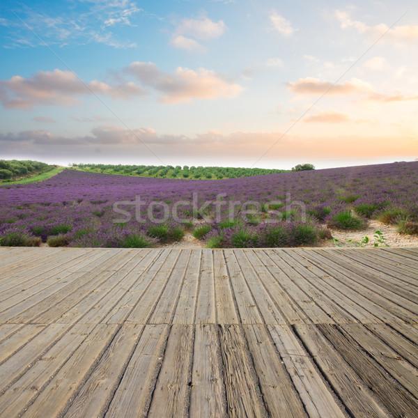 Campo de lavanda pôr do sol França céu Foto stock © neirfy