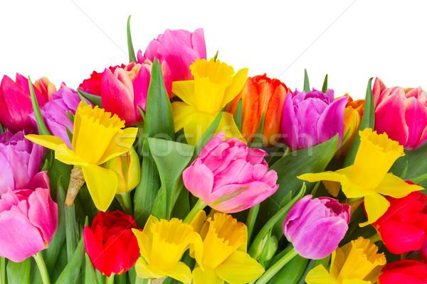 Buquê tulipas narcisos fronteira fresco rosa Foto stock © neirfy