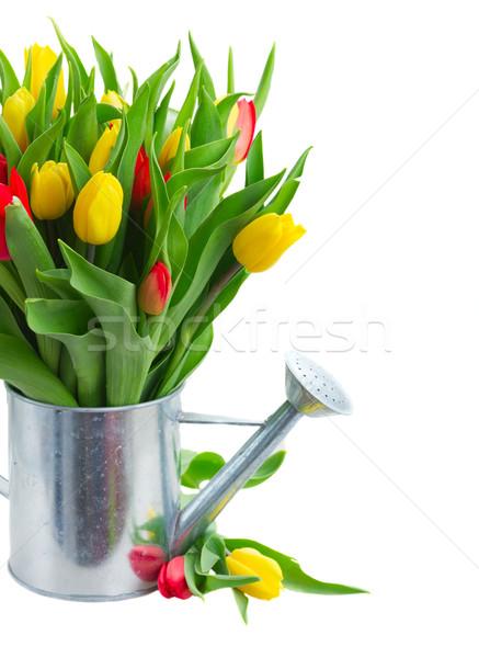 Virágcsokor citromsárga piros tulipánok friss tulipán Stock fotó © neirfy