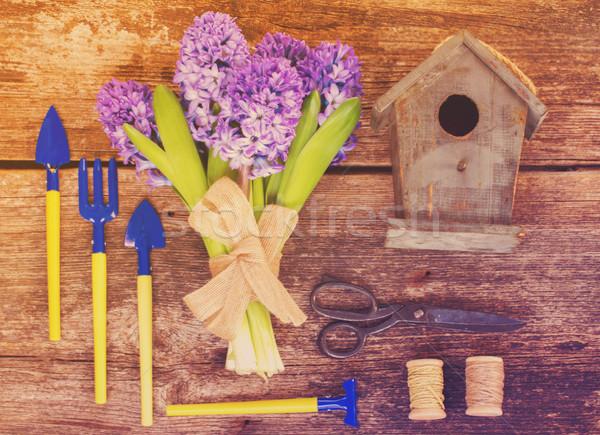 Azul jacinto jardinagem conjunto para cima flores Foto stock © neirfy
