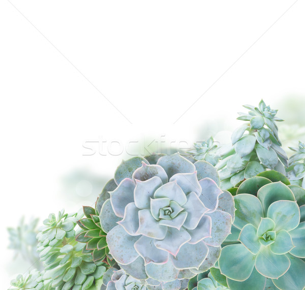 Nedvdús fehér egy zöld növények keret Stock fotó © neirfy