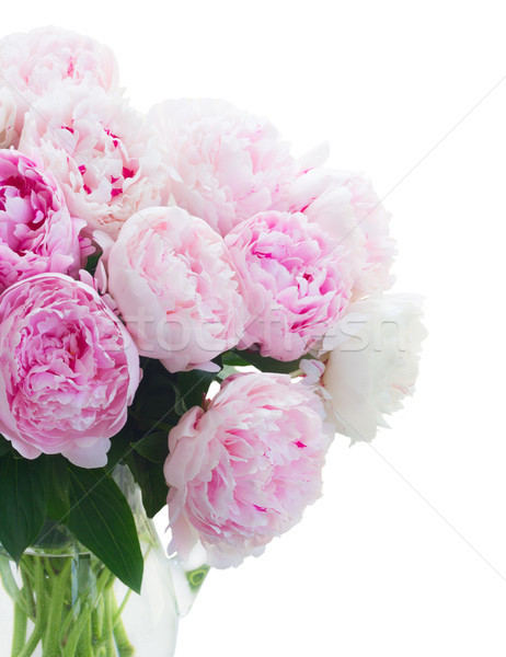 Fresh peony flowers Stock photo © neirfy