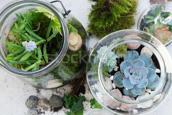庭園 石工 jarファイル ガラス 植物 ストックフォト © neirfy