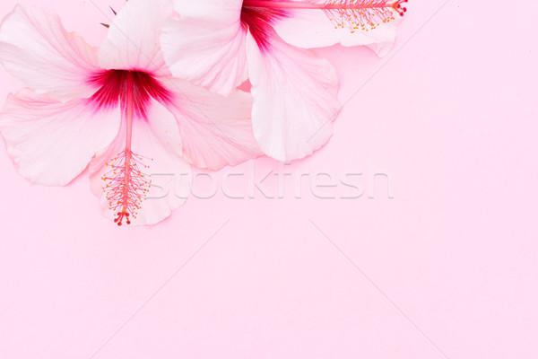 Wellness hibiszkusz virág kettő virágok rózsaszín Stock fotó © neirfy