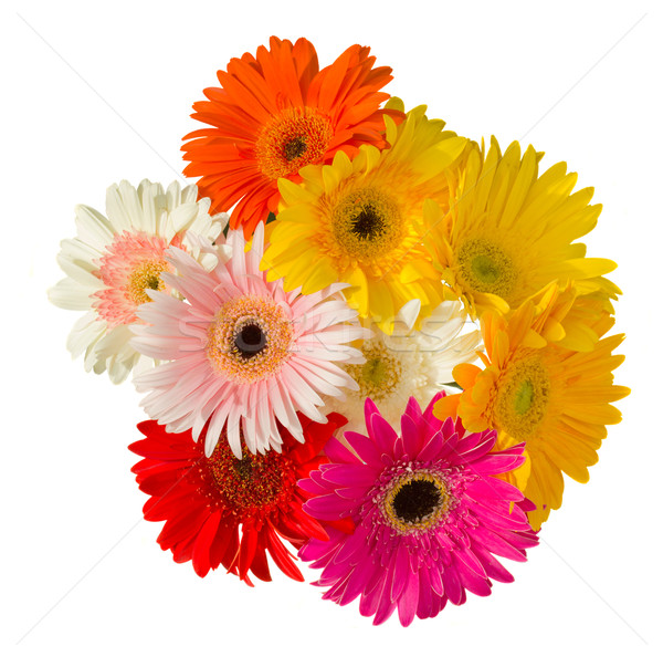 bouquet of gerber flowers Stock photo © neirfy