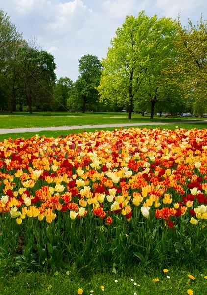 Voorjaar park Warschau landschap Polen bloem Stockfoto © neirfy