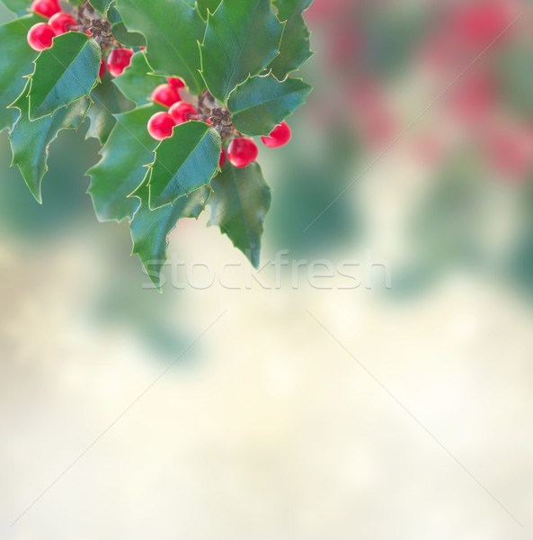 Holly branch on gray background Stock photo © neirfy