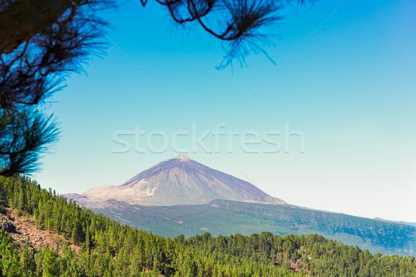Tenerife ilha pinho floresta parque Espanha Foto stock © neirfy
