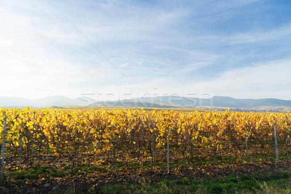 Wijn route landschap vallen Frankrijk weg Stockfoto © neirfy