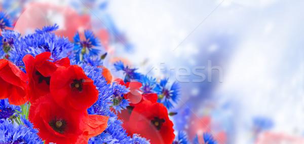 Maku chaber lata dziedzinie kwiaty niebieski Zdjęcia stock © neirfy