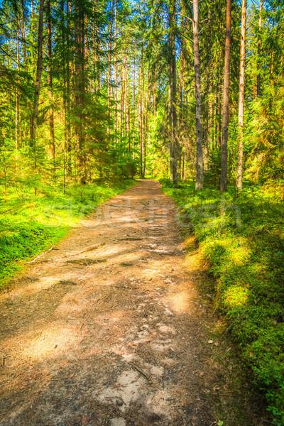 Stock fotó: Zöld · erdő · fák · út · gyönyörű · természetes
