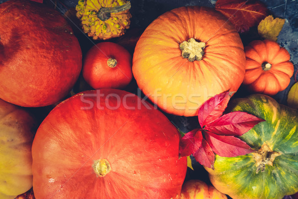 Harvest of pumpkins Stock photo © neirfy