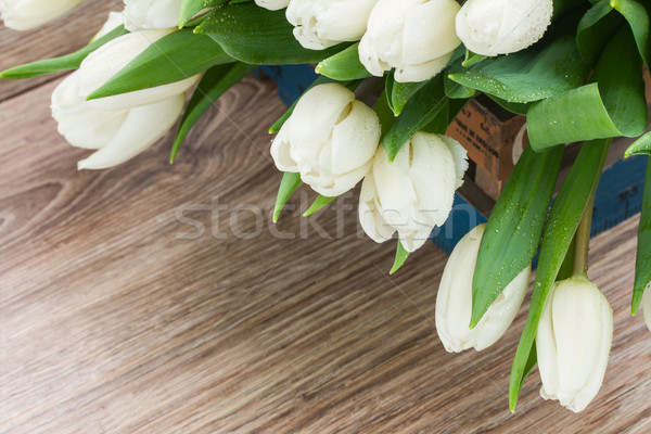 pile  of white  tulips Stock photo © neirfy