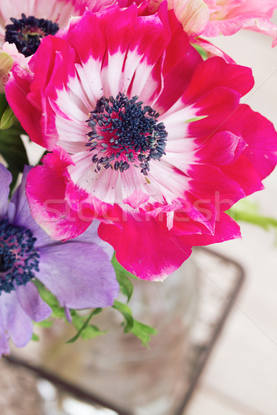 anemone flower Stock photo © neirfy