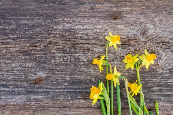 Nárciszok fából készült köteg friss tavasz citromsárga Stock fotó © neirfy