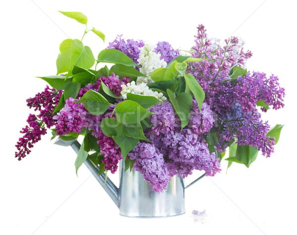 Lila jarrón flores regadera aislado Foto stock © neirfy